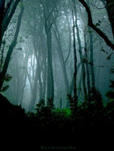 une forêt dans mon roman